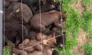 Big Bundle of Baby Bears