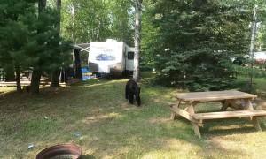 Bear Breaks Into Trailer for Buns