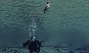 Bird Joins Scuba Divers Underwater