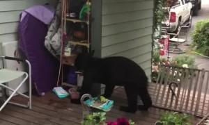 Bear Comes Back for Birdseed