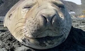 Seal Sneezes Sound Like Farts