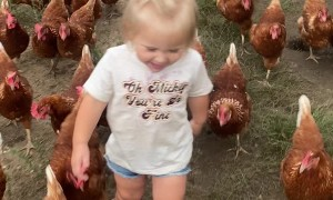 Adorable Little Girl and Her Army of Chickens
