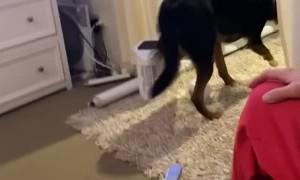Happy Pet Rat Bounds Away with Stolen Pasta