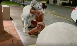 Missing husky reunited with owner after two months apart