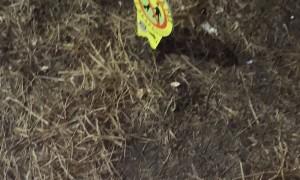 Lousy Neighbor Covers Common Area with Thumbtacks