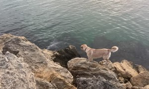 Friendly Doggie Meets Dolphin