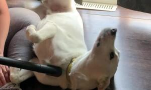 Doggo Gets Vac-Groomed
