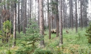 Close Encounter With a Grizzly Bear While Biking