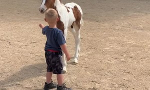 Boy and Foal Share Special Bond