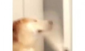 Dog's tail repeatedly hits other dog in the face