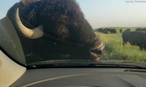 Bison Car Wash
