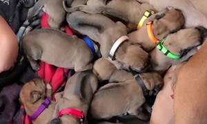 Girl Naps with Newborn Puppies