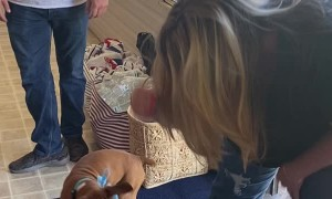 Surprising Sister with Boxer Puppy