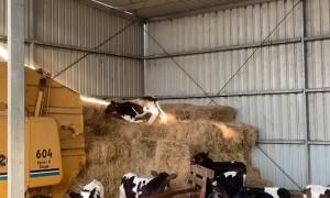 Parkour Calf Climbs up Hay Bales