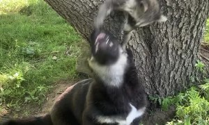 Baby Animal Pals Play Together in Tree