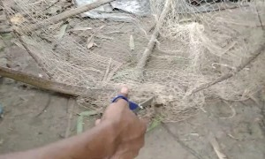 Patient Man Cuts Snake Free From Net