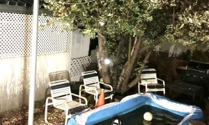 Family of Bears Enjoy a Late Night Pool Party