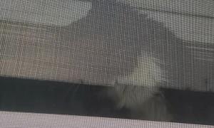 Jealous Kitty Uses Rapid Paws on Window