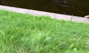 Exhausted Dog Extracted From Canal