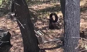 Bear Cubs Turn Backyard into Playground