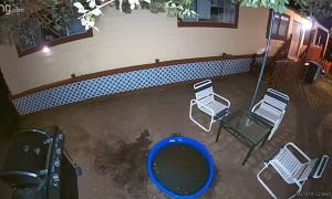 Bear Cools Off at Night in Kids Swimming Pool