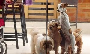 Doggy Teamwork Gets the Glass Door Open
