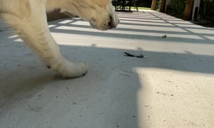 Doggy Spots Spooky Feather