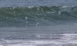 Thresher Shark in Rhode Island Gets Close to Kayaker