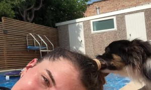 Pool Attendant Pup Pulls at Ponytail
