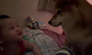 Newly Woken Baby Smiles at Shiba