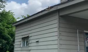 Wild Kitty Naps under Rooftop