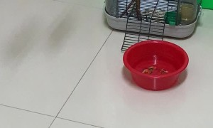 Birds Create Swing With Electrical Cord