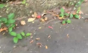 Scary Moment Girl Steps on Something Squishy