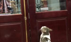 Clever Cat Called to Open Closed Door