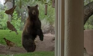 Bear Makes Off With Bird Feeder