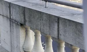Friendly Seagull Barks on Balcony
