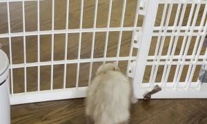 Fuzzy Ferret Flows Through Fence