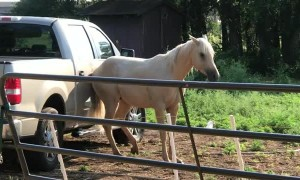 Rescue Horse Uses Truck as Scratching Post