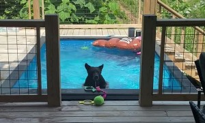 Young Bear Enjoys Cool Pool in the Afternoon