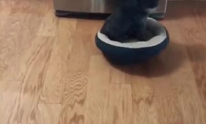 Dog Does Chores from Bed