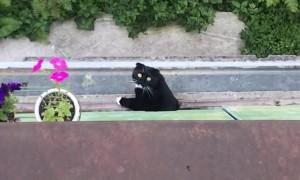 Window Kitty Entranced by Bizarre Serenade