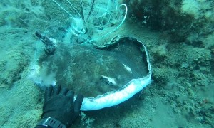 Swimmer Gives Tangled Stingray A Second Chance