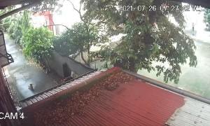 Maltese Unharmed When Typhoon Topples Tree Limb