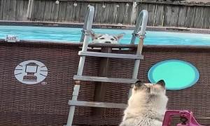 Huffy Huskies Play in Pool
