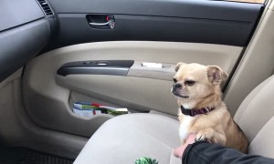 Puppy's Adorable Tactic To Not Let Owner Drive Away