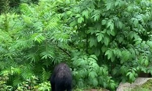 Baby Bear Continuously Visits New Hampshire Patio