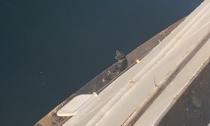 Dog On Unprotected Edge of Ferry