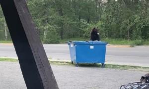 Bear Opens Blue Lunchbox