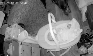 Gentle Doberman Brings Baby a Toy