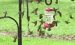 Hummingbird Feeder Frenzy